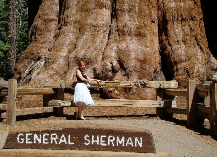 Sherman_3