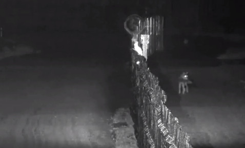 Видео: драка оленей на украинско-белорусской границе